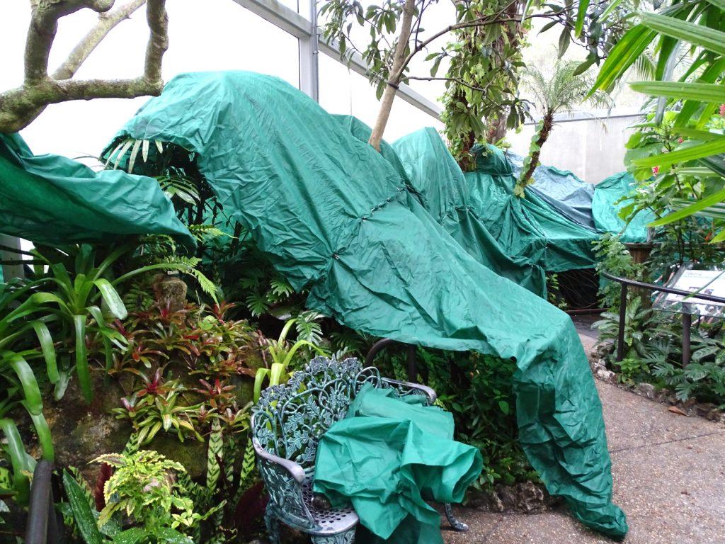 tarps covering Rainforest plants