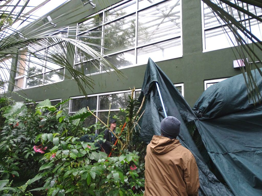 covering Rainforest plants
