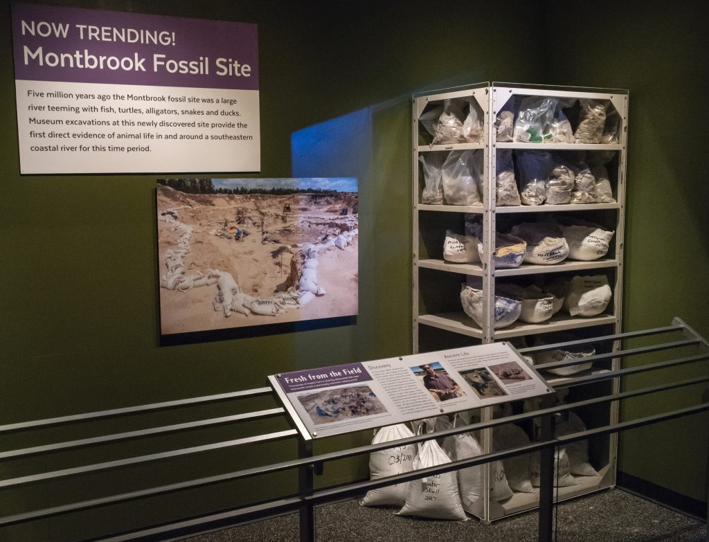 Discover the history of the Montbrook site and the process of collecting and cataloging fossils from the field to the lab.