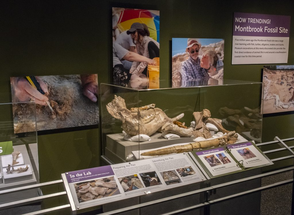 Learn about the latest findings by museum staff and volunteers with more than 30 specimens from the Montbrook site.