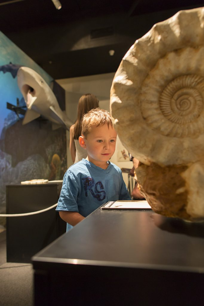 """Fossil casts and reconstructed models provide a hands-on experience of the Permian Period in the """"Permian Monsters: Life Before the Dinosaurs"""" exhibit, on display at the Florida Museum in Gainesville Sept. 29, 2018-May 5, 2019. ©Photo courtesy of Denis Smith"""