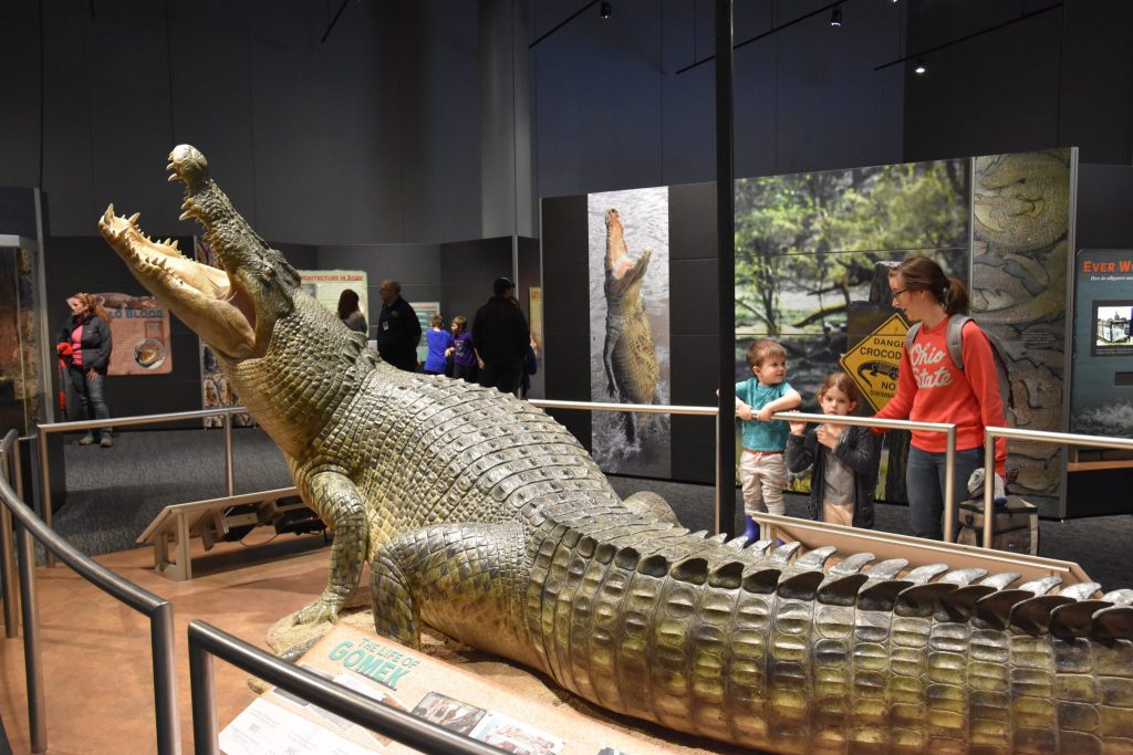 people look at model of a crocodile