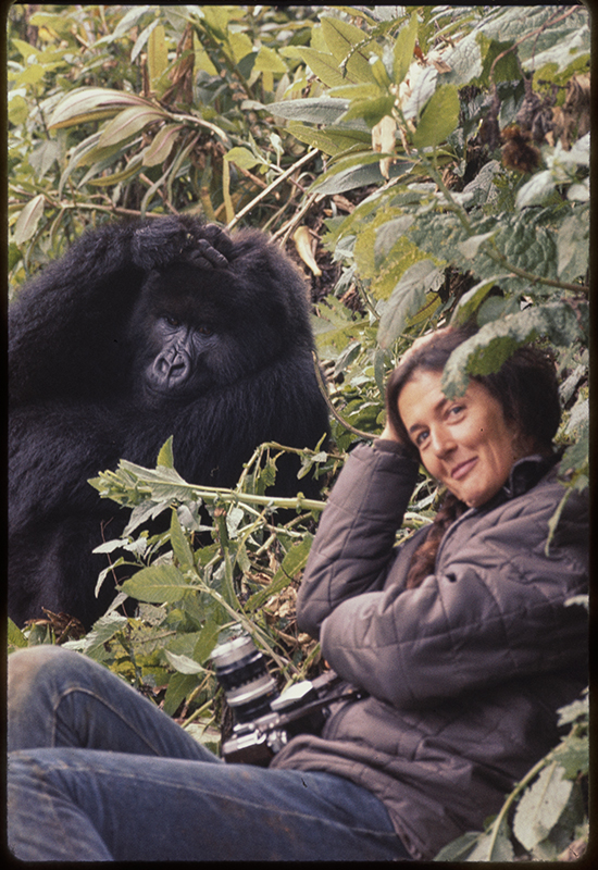 woman and gorilla