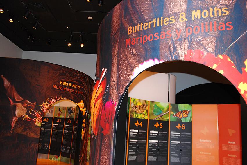 entrances of exhibit