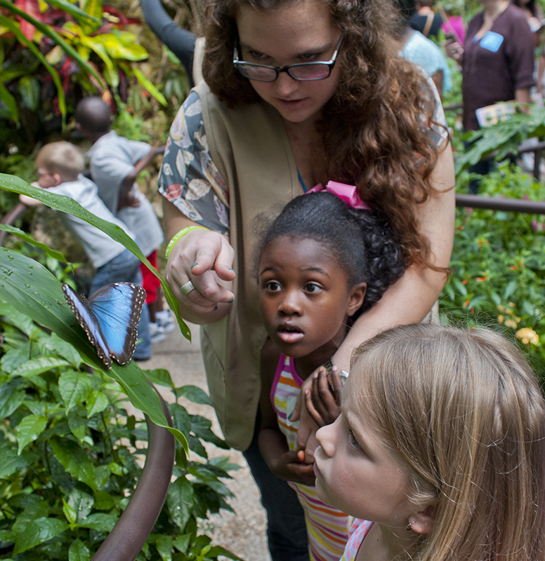 docent and kids looking at a butterfly