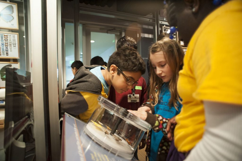 several school kids look into a magnifier in an exhibit