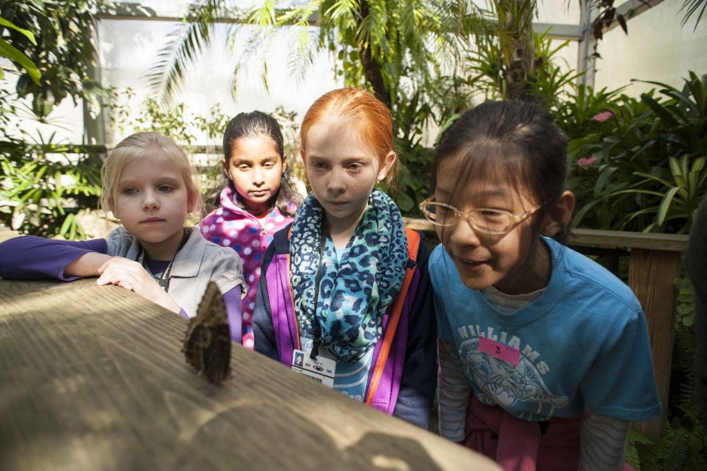 several students look at a butterfly on a railing