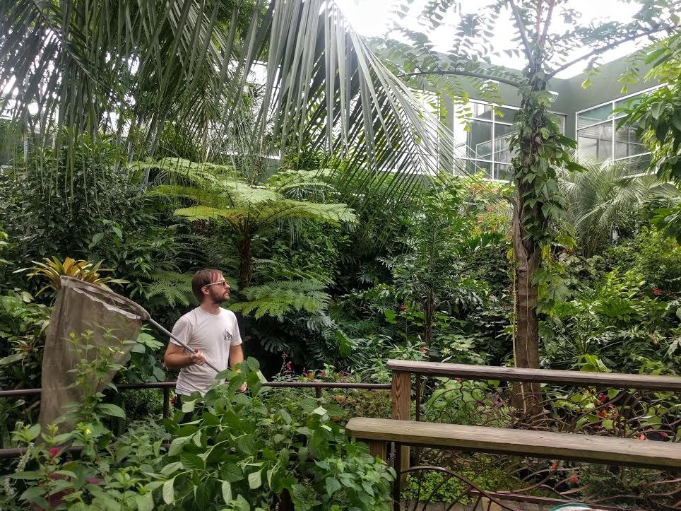 man in rainforest exhibit with butterfly net