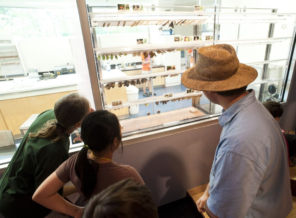 several people watch chrysalis in the window of the lab