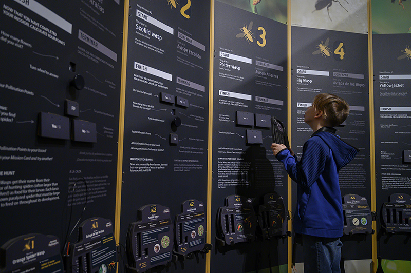 boy looking at exhibit walls