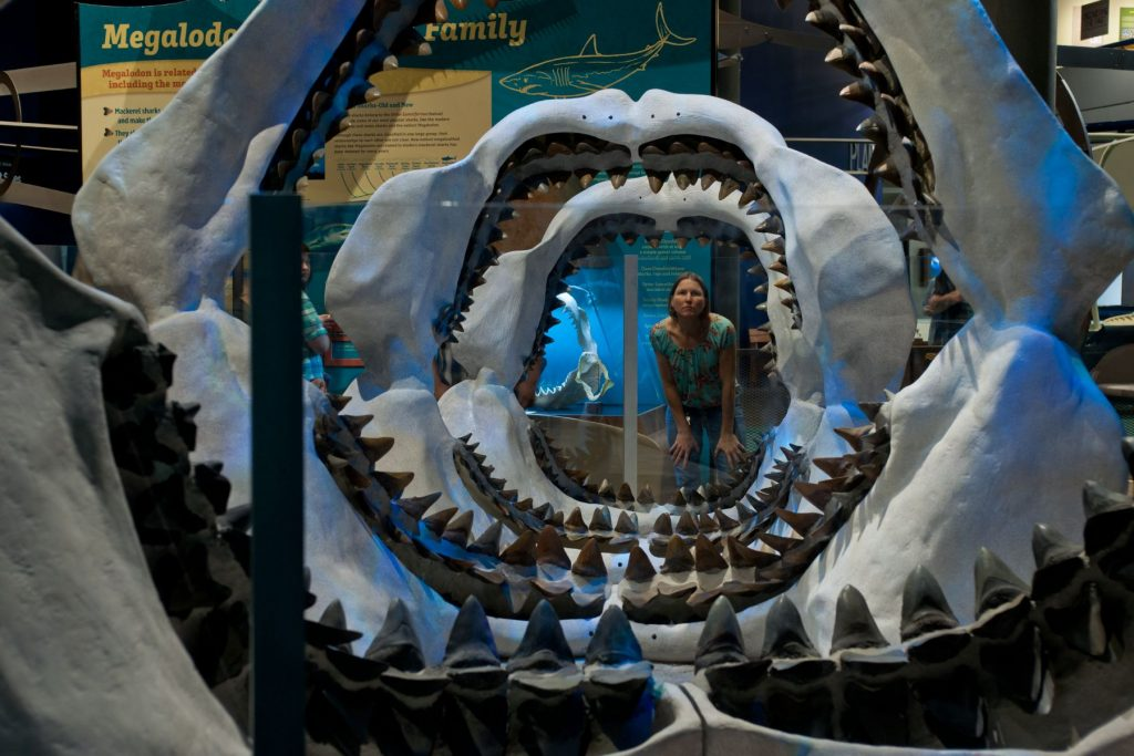 a woman looks through several shark jaws lined up in a tunnel formation
