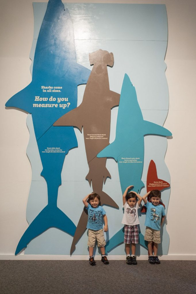 three kids standing in front of a life-size display of shark lengths