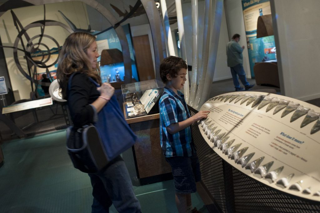 child and adult looking at panel displaying large shark teeth