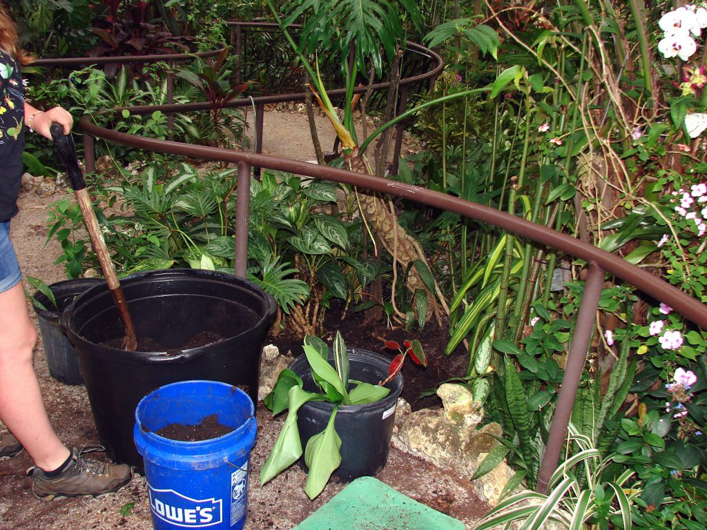 staff working with plants and buckets of soil in a rainforest exhibit