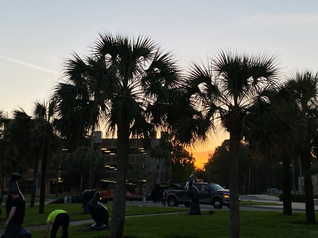 sunrise behind several pal trees