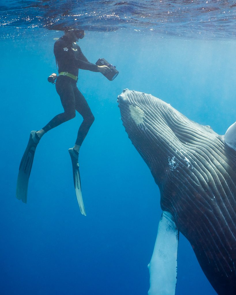 man holding a camera swims in front of the nose of a whale
