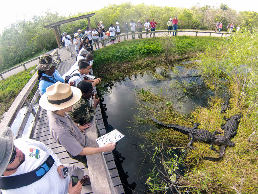 Tourist and park guide look at alligators in the Everglades.