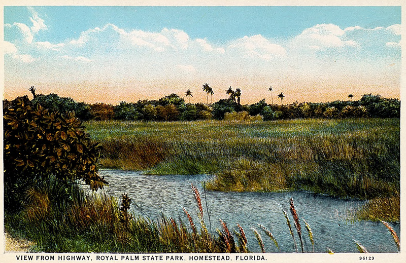 Illustrated postcard with view from highway, Royal Palm State Park, Homestead, Florida.