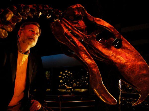 man looks at skeleton of large bird-like prehistory animal
