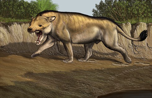 drawing of Andrewsarchus