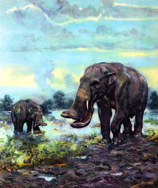 painting of Platybelodon