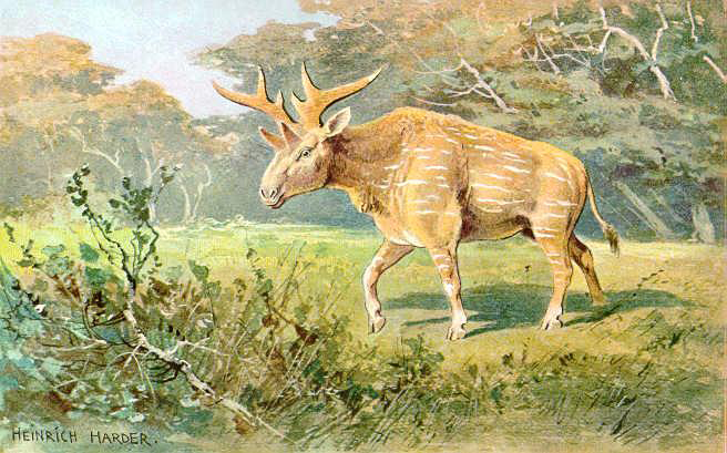 artistic drawing of a Sivatherium