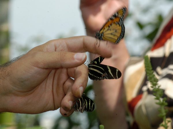 several butterflies resting on a persons hand