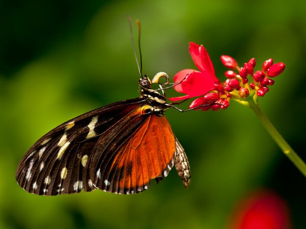 small orange and black butterfly on a sprig of red flowers