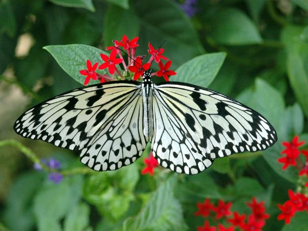black and white butterfly on a red flower