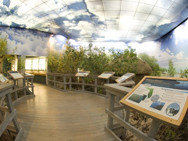 South Florida Exhibit, wooden walkway through the exhibit swamp. The walls and ceiling are painted to look like the sky. Signs line the walkway explaining parts of the exhibit.