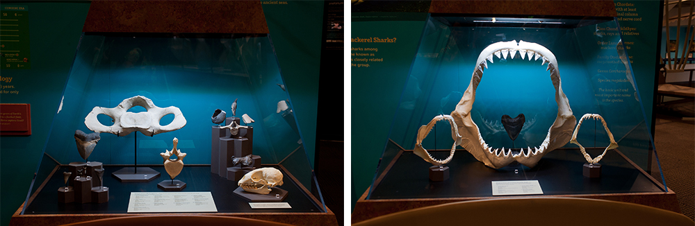 specimen cases