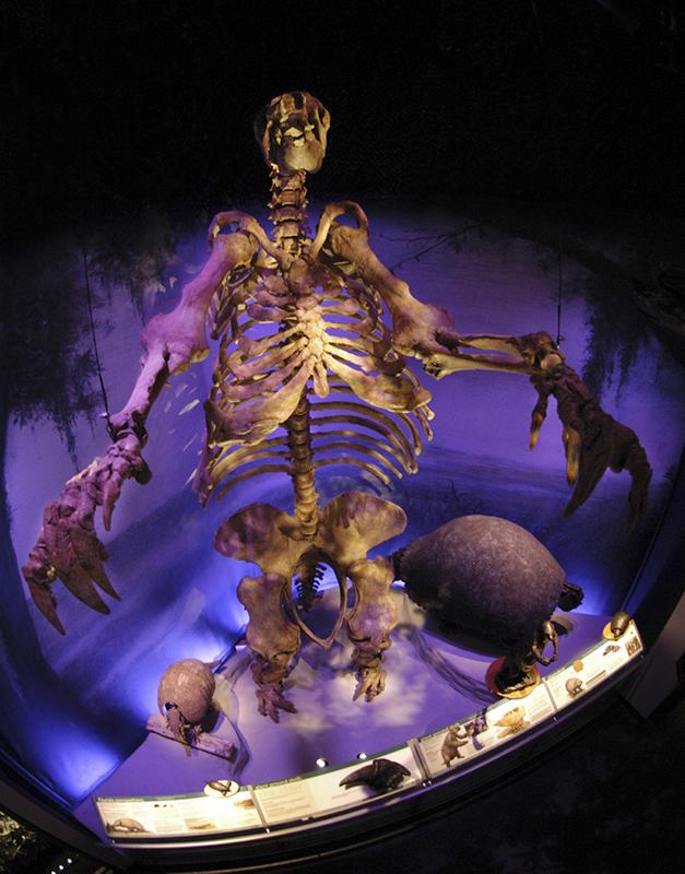 skeleton of a giant sloth