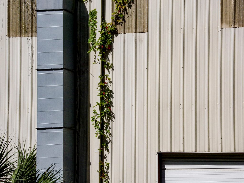 vine on a white building