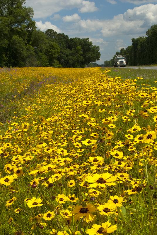 flowers on a roadside