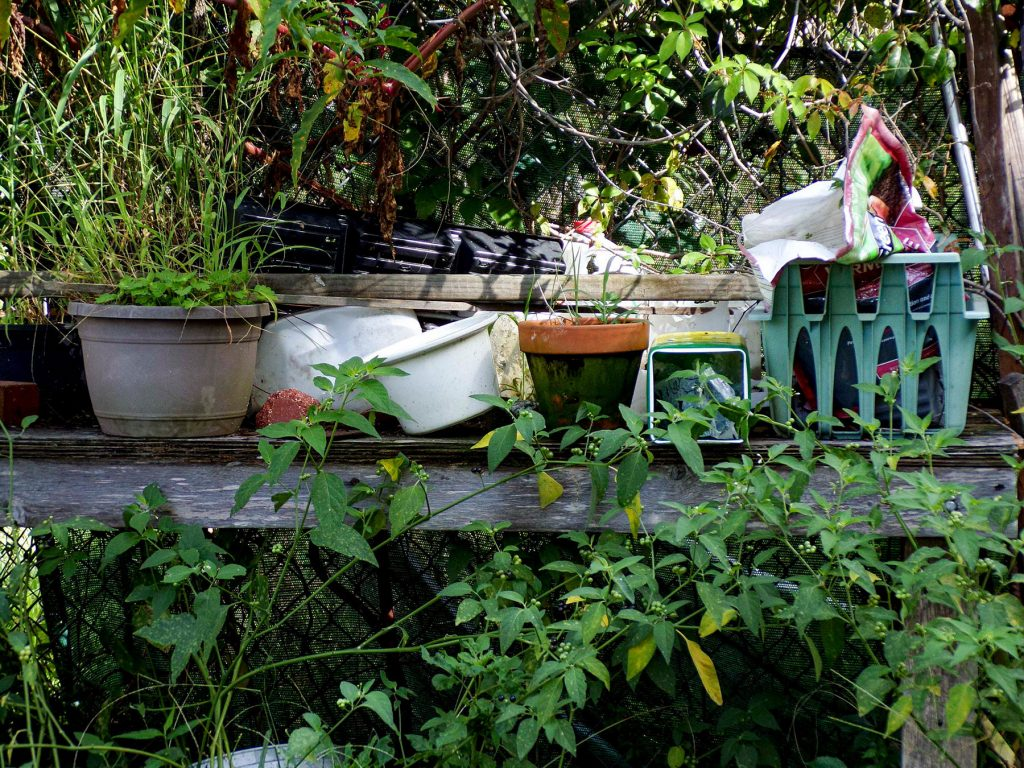 pots and gardening tools on an old bench surrounded by weeds