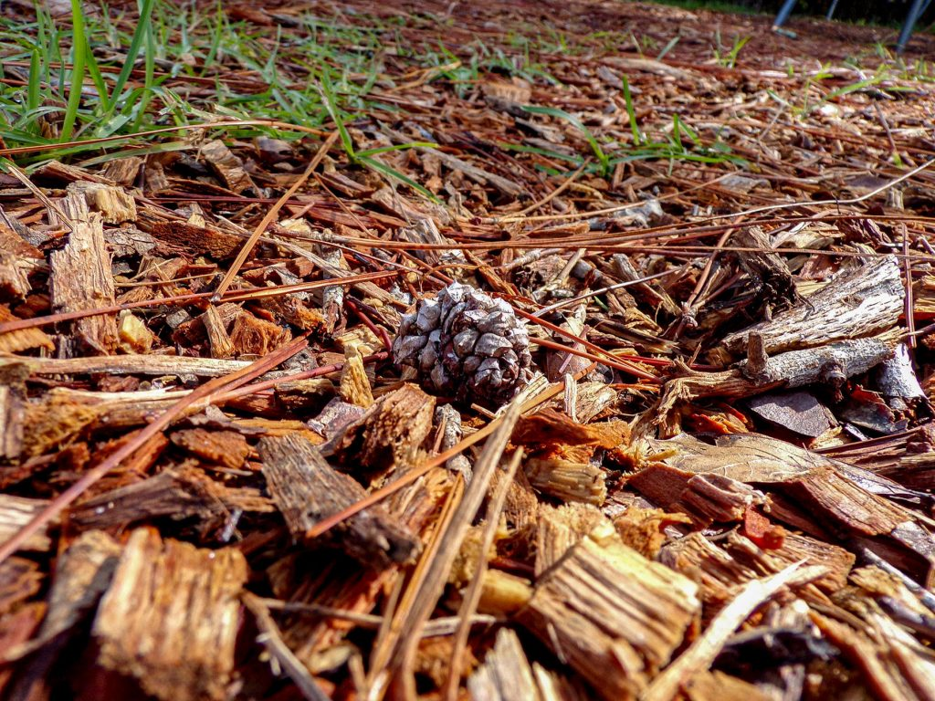 pinecone on the ground surrounded by bark and pine needles