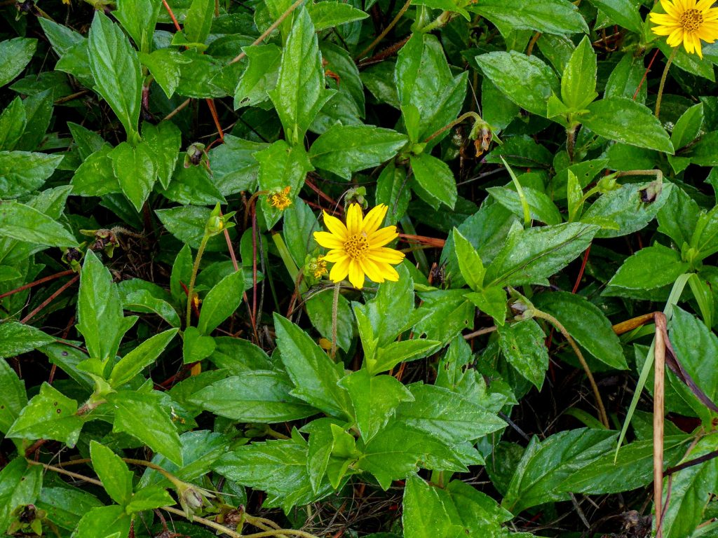 yellow flower and green leaves