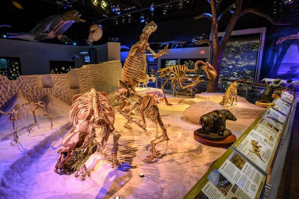 skeletons in exhibit hall
