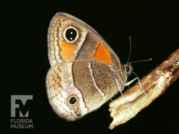 brown and orange butterfly on twig