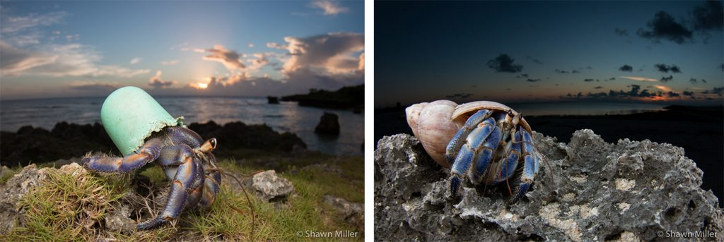 two pictures of a hermit crab