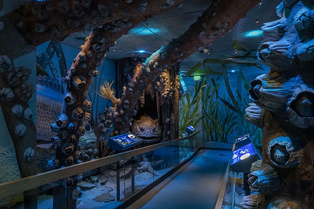 south florida exhibit's underwater component