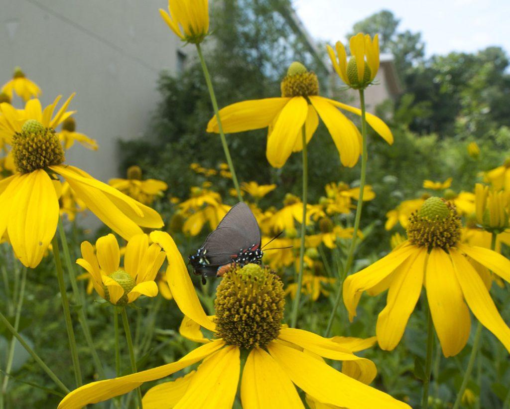 butterfly on yellow flower in garden