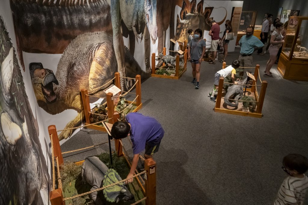 people in exhibit's petting zoo