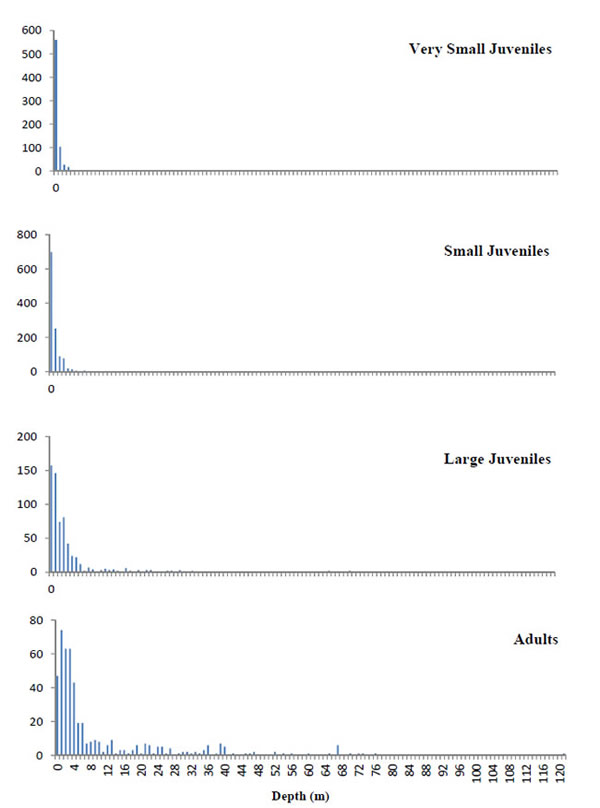 Depth distribution of reported U.S. sawfish encounters by size from January 1998 to May 2011, by number of reports. Adults >340 cm TL, large juveniles >200<340 cm, small juveniles >100<200 cm, very small juveniles <100cm