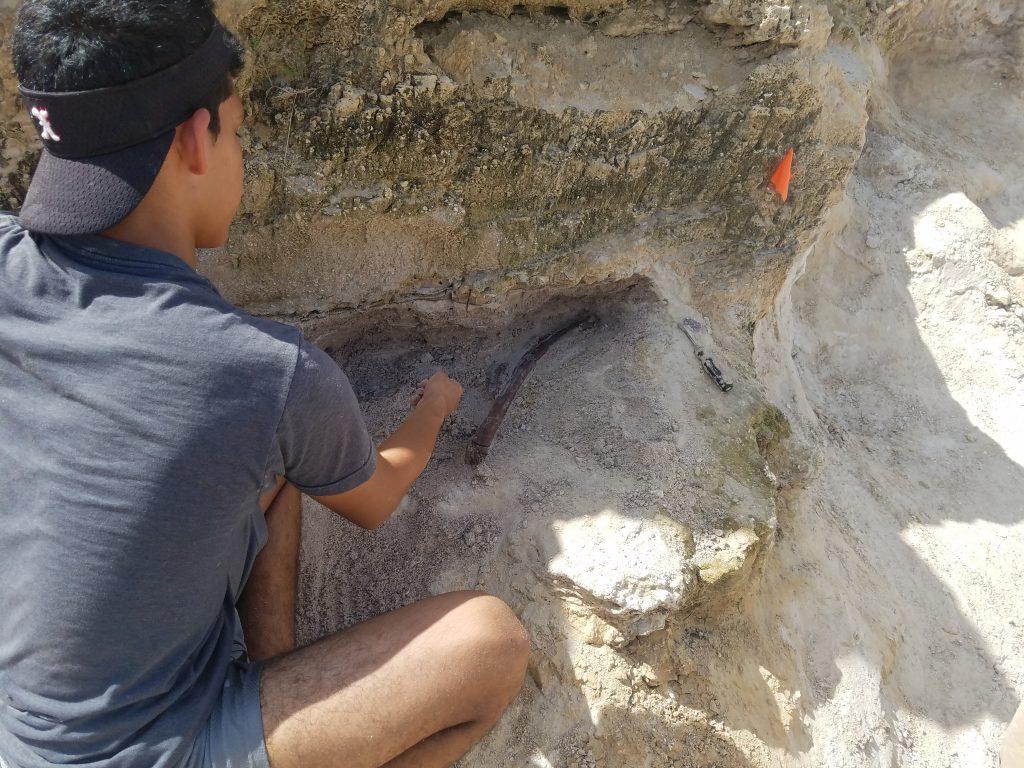 Fabrizio Menezes excavating gomphothere rib