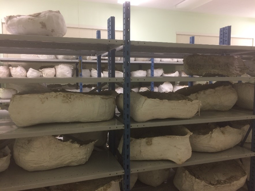 A few of the many plaster jackets in storage.
