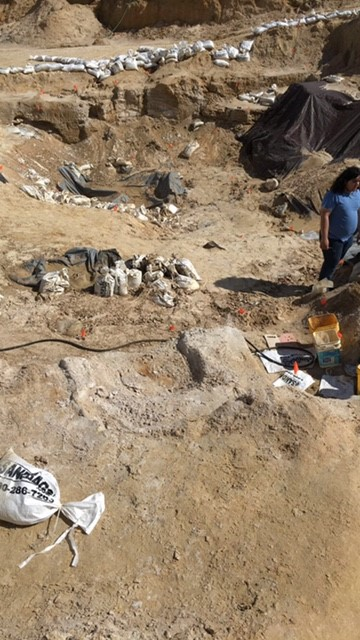 The overall site.