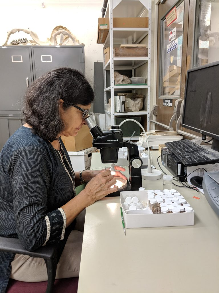 Bhavna Bhardwaj picking microvertebrate fossils.
