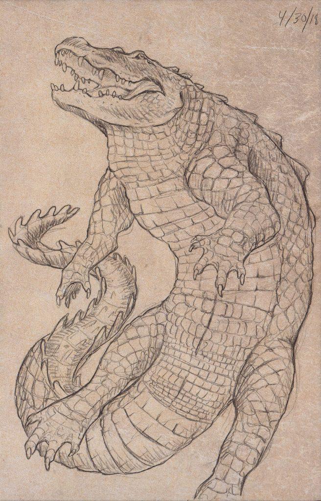 Alligator mississippiensis by Rachel Keefe