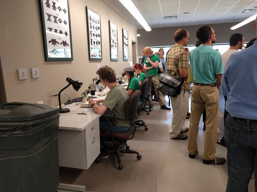 Picking micro vertebrate fossils in the Gray Fossil Site prep lab. Photo by Rachel Narducci.